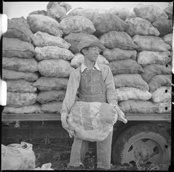 A young field worker loads potatoes grown on the farm of the Tule Lake incarceration camp