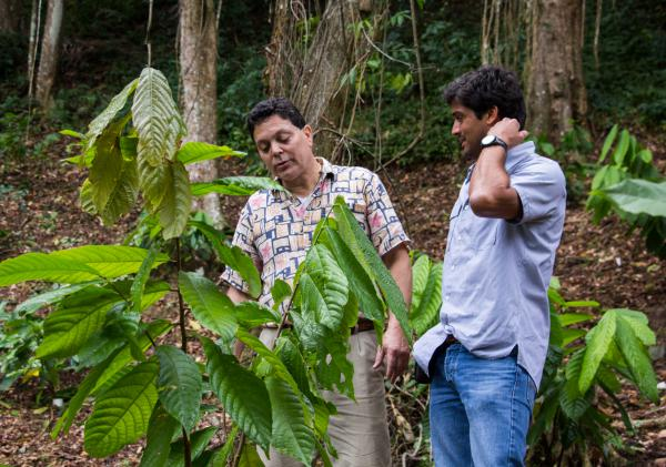 Eduardo Cortes (right) and Jose Martinez Cruzado examining one of the cocoa trees that Cruzado is growing for Cortes's company.