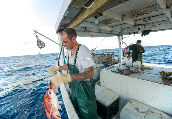 A fisherman in the Gulf of Mexico. Catch share programs allot fishermen a portion of the catch in advance, in hopes of keeping them from racing each other to sea, sometimes in risky weather. These programs are controversial. They also work, a new study finds.