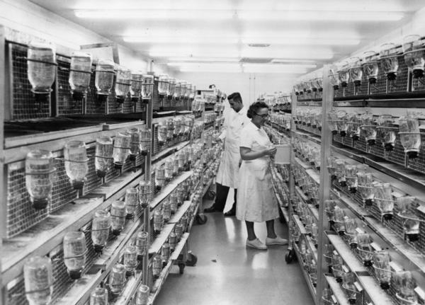 The rat holding facility at Hazelton Laboratories in Washington, D.C., in 1967.