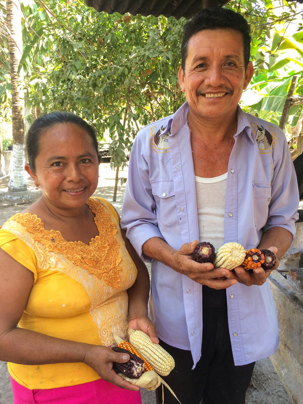 Hilda Pastor's husband, Anibal Lopez, hopes that more people can find appreciation for heirloom corn flavor. Commercial corn production in the U.S. has made it difficult for farmers like Lopez, who cultivates heirloom varieties in Mexico, to make a living.