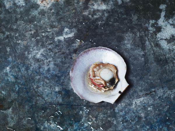 "This dish features a scallop in its shell. Bivalves, like scallops are threatened by rising ocean acidification. Wist left it in the shell, so people would think of it ""as an animal and not just a scallop on a plate."""