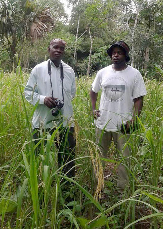 "Ethnobotanist Francis Morean of Trinidad and Chef Benjamin ""B. J."" Dennis of South Carolina stand in a field of Moruga Hill Rice in southern Trinidad. This rice is a remarkable link between West Africa, the Gullah-Geechee sea islands of the American South, and the Merikin settlements of southern Trinidad."