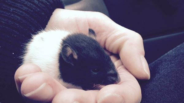 A rodent named Snuggles was saved by volunteers at an overdose prevention site, after expereincing a heroin overdose.