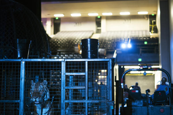 A tiger stands in a cage backstage. Elephants were retired from the circus in 2016 but the show features several lions and tigers.