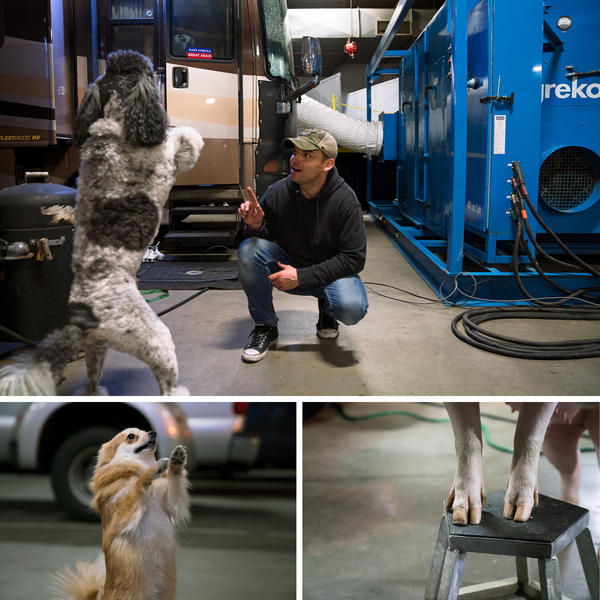 Hans Klose trains poodles, terriers and a 700-pound pig named Roscoe to perform in the circus.