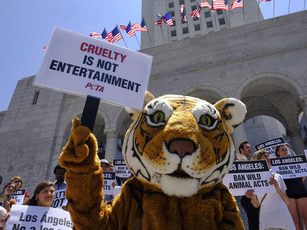Protesters with People for the Ethical Treatment of Animals (PETA), including a costumed tiger, gathered at City Hall in Los Angeles last year to call on the city to prohibit circuses from using tigers, lions and other wild animals in their acts. Circuses have been a target of PETA since it was founded in 1980.