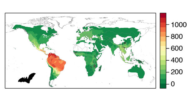 Bats are among the animals carrying viruses that have not yet infected humans but have potential for spillover — particularly in South and Central American and parts of Asia. On the color scale on this map and the two maps below, the warmer colors represent a greater risk of viruses jumping into people and green shades show a lower risk.