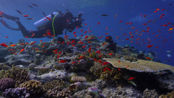 <em>Chasing Coral</em> follows a team of researchers and filmmakers as they document coral bleaching events.