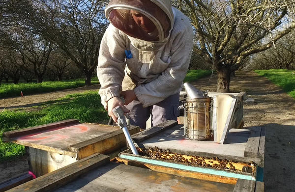 Brandon Hopkins, a cryopreservation specialist, works in Washington State University's fruit tree orchard in Pullman, Wash. As a doctoral student at WSU, Hopkins perfected a system of freezing and thawing bee semen for use in artificial insemination.