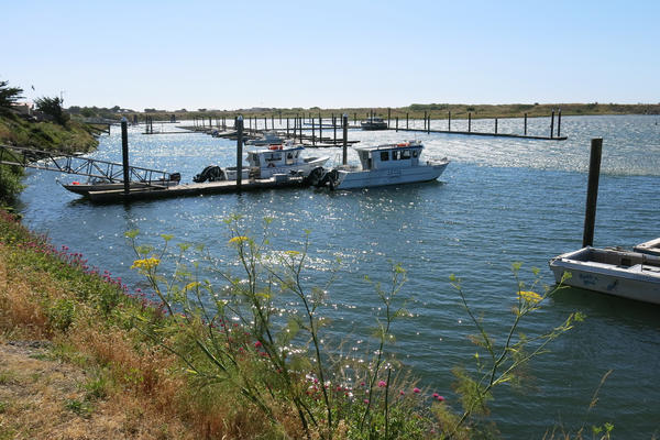 The Port of Gold Beach at the mouth of the Rogue River. When NPR Correspondent Jeff Brady lived here in the 1980s, this harbor was filled with several dozen boats, but amid a declining fishery most of the commercial fishing business has moved to more profitable ports along the Pacific Coast.