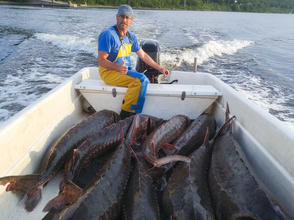 "Sturgeon fisherman Bill Ford has filled Ceapa's boat, ""Sturgeon Queen,"" with his morning's catch: a few gillnets full of wild, six- to eight-foot long Atlantic sturgeon from the St. John River."