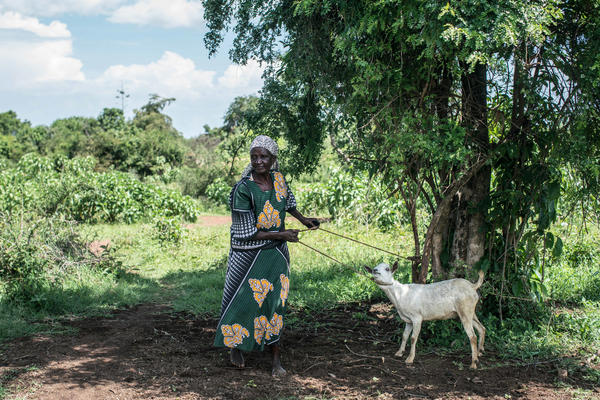 Mary Abagi on her farm. She used the payout from her merry-go-round savings club to buy a goat.