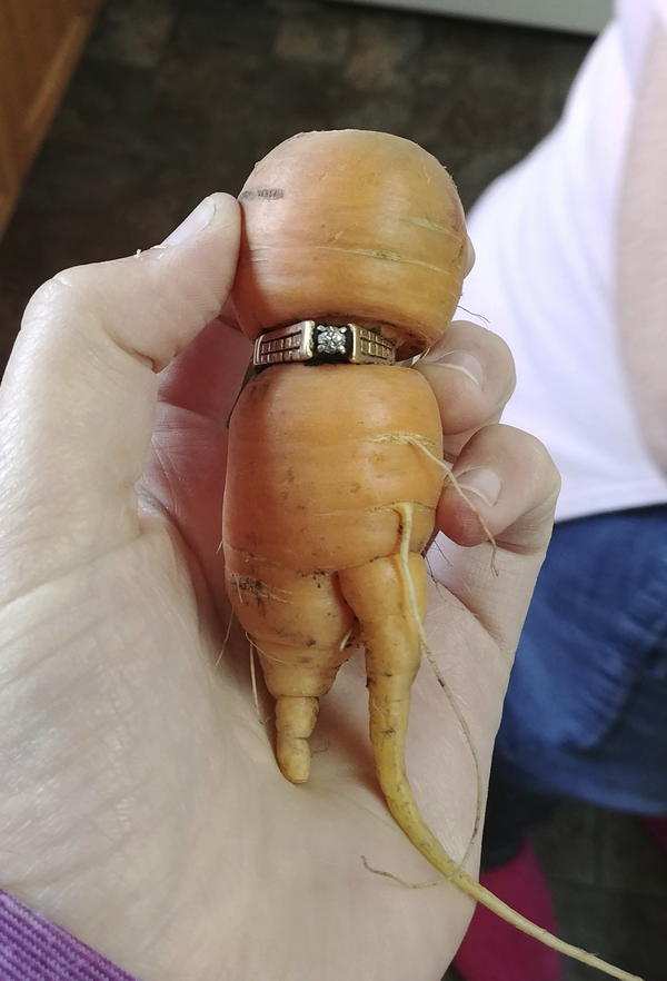 Mary Grams, 84, holds a carrot that grew through her engagement ring in Alberta, Canada. Grams, who lost her diamond ring 13 years ago while pulling weeds in her garden, is wearing it proudly again after her daughter-in-law pulled it from the ground on a misshapen carrot.