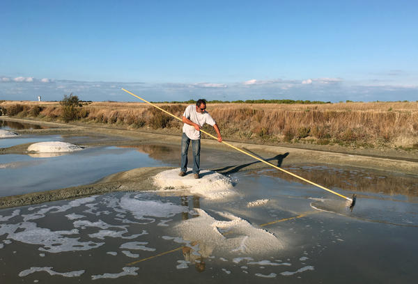 Hervé Zarka uses a tool called a <em>simoussi</em> to rake up salt in his marshland on the island of Noirmoutier in France. He says there are many minerals in natural sea salt, such as magnesium and potassium, that aren't in industrial salt.