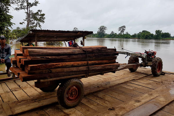 Freshly cut timber is transported across the Sesan River toward the dam construction site. Villagers claim illegally harvested hardwood is being laundered at the dam construction site.