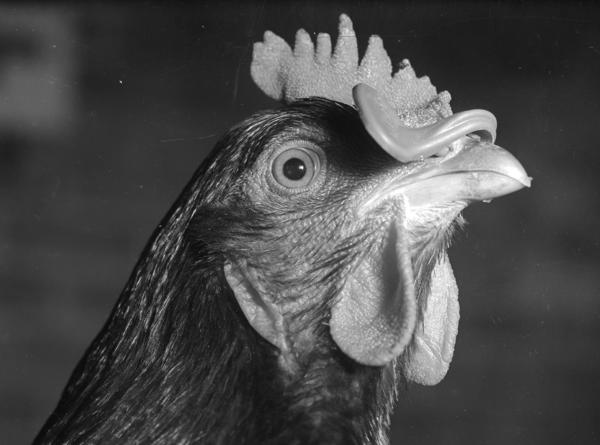 In the 1950s, the poultry industry began dunking birds in antibiotic baths. It was supposed to keep meat fresher and healthier. That's not what happened, as Maryn McKenna recounts in her new book.