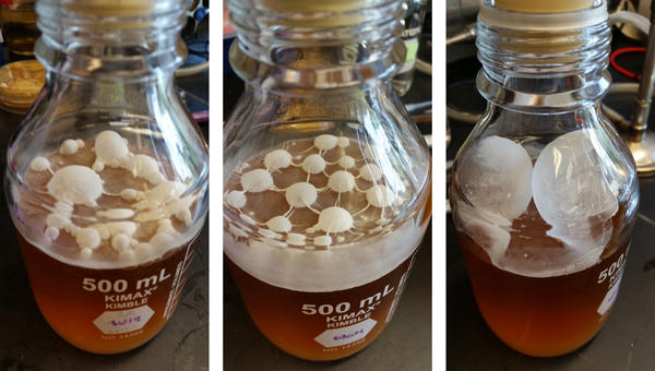 Souring yeast are more resistant to alcohol and hops, allowing for stronger, hoppier beers.