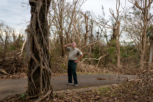 "Dr. Ariel Lugo looks at a damaged tree on the grounds of the University of Puerto Rico's Botanical Gardens. ""You asked me who got defoliated, everyone did,"" Lugo says about the bare trees."