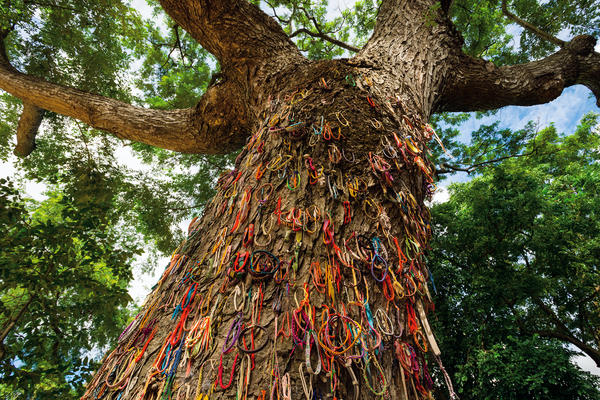 "To remember the children killed at this monkey pod tree by Cambodia's Khmer Rouge, visitors hang bracelets on the bark — woven threads, embroidered cloth, leather and beads. ""It's hard to escape the feeling of death when you're there, despite this very green, park-like setting,"" says Diane Cook."