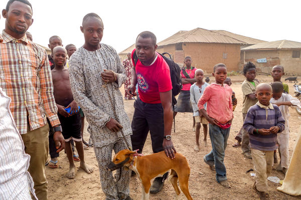 """Local dogs"" in Nigeria actually have a unique pedigree. The dogs' ancestors likely came to the continent 14,000 years ago and have been largely isolated from European and Asian dogs ever since."