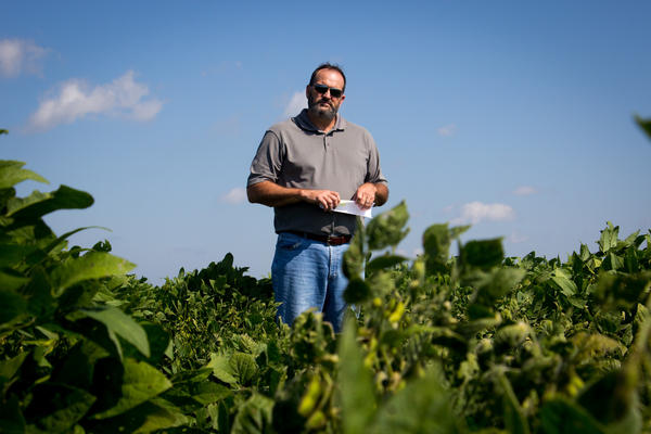 Bob Scott, a weed scientist at the University of Arkansas, and his colleagues conducted experiments on the effects of dicamba drift on nearby crops.