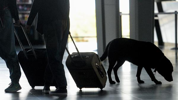 A dog trained to find drugs and banknotes smells luggage at the Mulhouse airport in France on Oct. 10. Dogs trained to detect explosives are expected to be deployed at international airports as part of heightened screening measures for flights to the U.S.