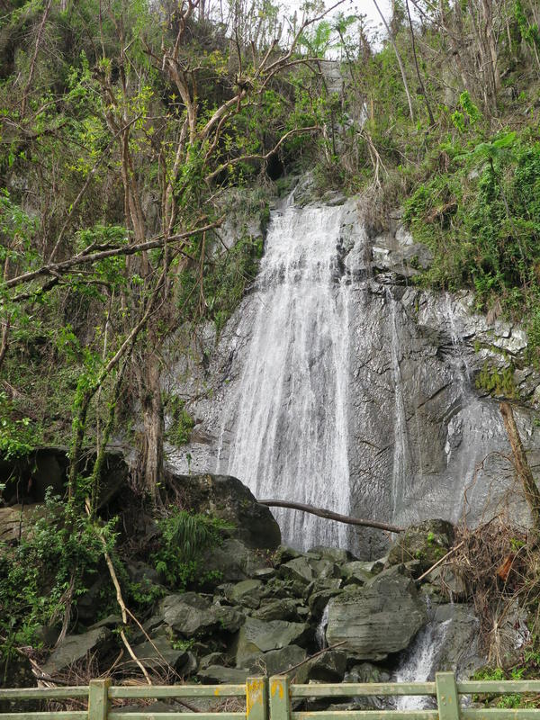 Following the hurricane, more water than usual is flowing over La Coca Falls, a drop of 85 feet and one of El Yunque's most popular tourist spots.