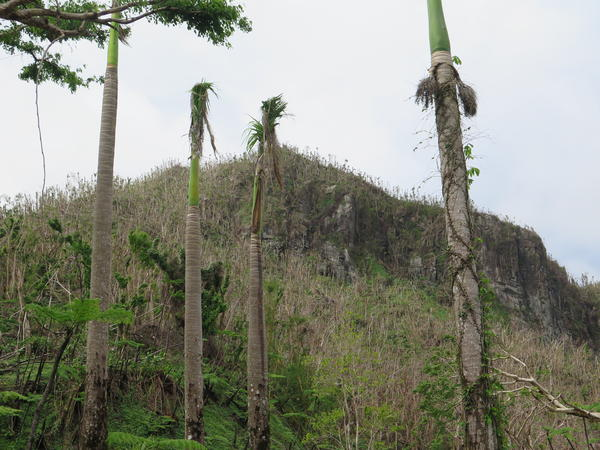 Hurricane María's 150-mph winds destroyed the tropical rainforest's canopy and stripped trees bare. Scientists believe as many as one-fifth of the forest's trees may eventually die from the storm's effects.