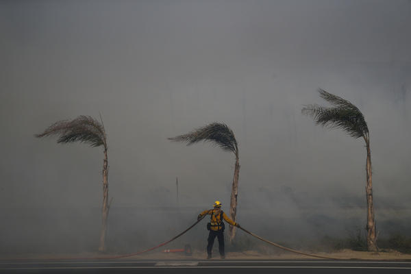 Palm trees sway in a gust of wind as a firefighter carries a water hose while battling a wildfire at Faria State Beach in Ventura, Calif.