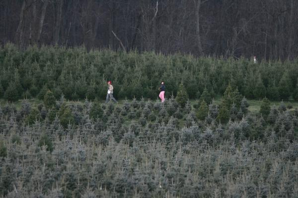 Shoppers walk through a forest of Christmas trees on the Snicker's Gap Christmas Tree Farm in Bluemont, Va., in 2004. This season, a tightened tree supply dates back a decade ago, when fewer trees were planted during the recession.