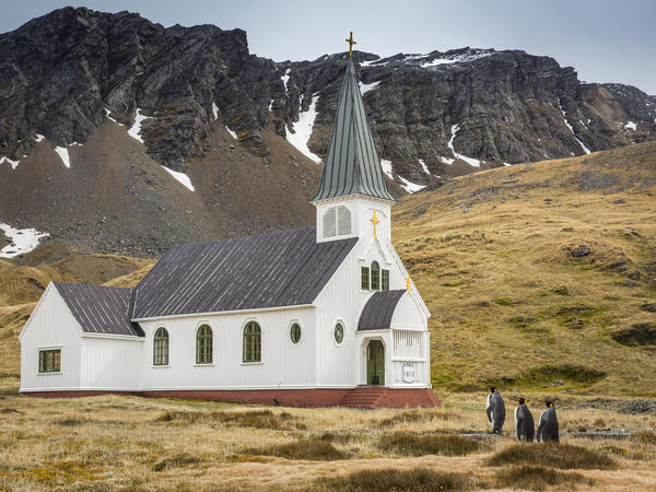 Three king penguins approach the only church on South Georgia Island.