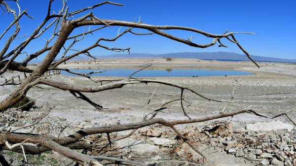 A dead tree frames a former marina inlet on the Salton Sea in Salton City, Calif. A large portion of the lake is expected to dry up in the coming years.