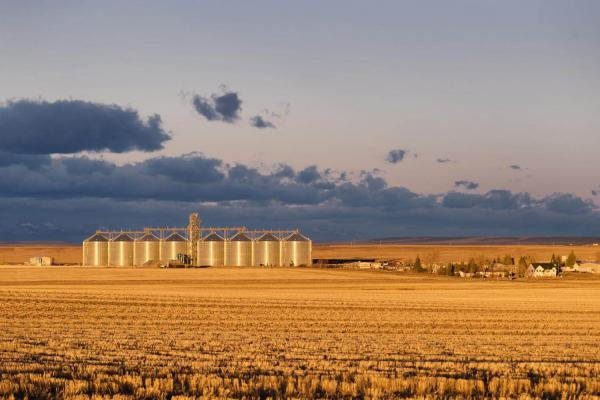 MillerCoors barley elevators in Power, Mont. (Courtesy Food & Environment Reporting Network/Louise Johns)