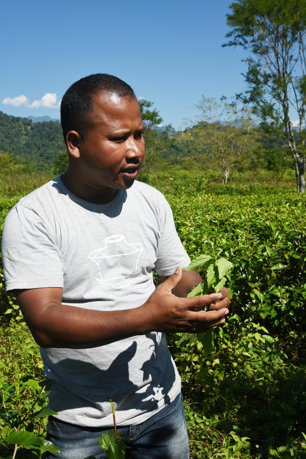 Tenzing Bodosa is a tea grower and a staunch practitioner of organic farming. He stands in his small tea estate beside the nature preserve he has cultivated.   <strong> </strong>