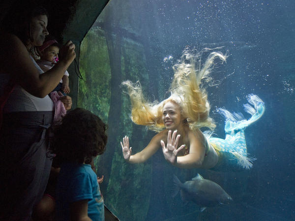 Visitors watch Mirella Ferraz as she swims with fish in a giant tank during an aquarium show in São Paulo, Brazil, in 2013.