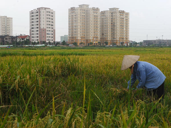 A paddy field sits on the outskirts of Hanoi, the capital of Vietnam, the only country that even comes close to delivering the good life in a sustainable way.