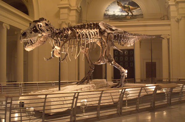 Beloved by thousands, Sue the Tyrannosaurus rex is moving from her home in the main exhibition hall of Chicago's Field Museum to her own private suite on the second floor.