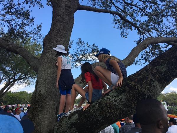 Donatella Masson, Chloe Trinh and Lowa Johansson get a tree's-eye view of Tiger Woods at Bay Hill Sunday as he passes by on the eighth hole.