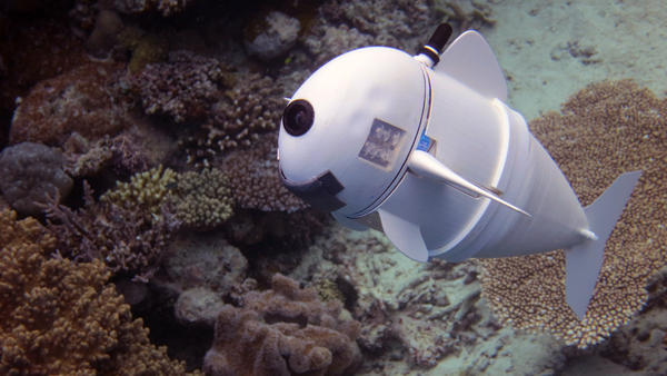 SoFi, the robotic fish, swims in for its close-up. MIT computer scientists hope SoFi will help marine biologists get a closer (and less obtrusive) look at their subjects than ever before.