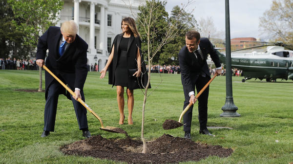 President Trump and French President Emmanuel Macron joined in planting a symbolic oak sapling on the South Lawn of the White House last week. By the weekend, it was gone from the spot.