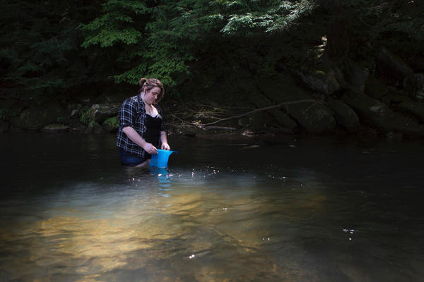 Tawni Duncan keeps a hellbender salamander in the water until it's ready for release.