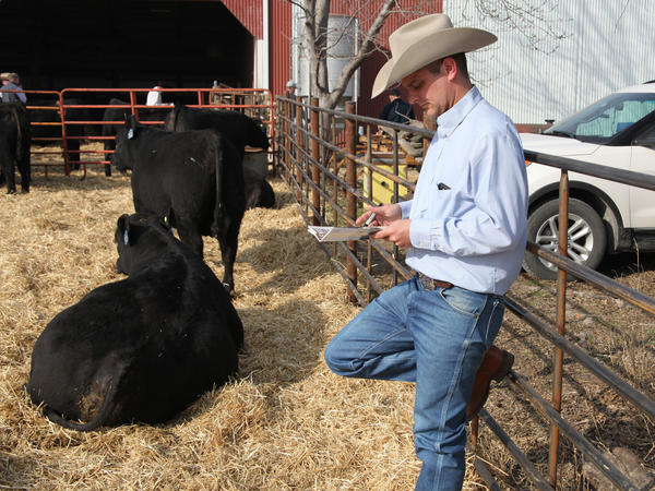 Cattle sales consultant Wes Tiemann reviews the catalog for an Angus auction at Henke Farms in Salisbury, Mo. Each animal in the auction is DNA tested.