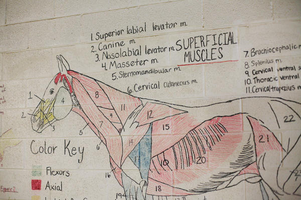 Teaching diagrams line the walls of the riding arena at Midway University.
