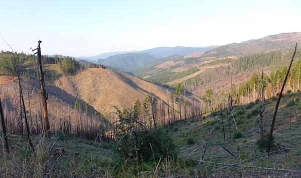 "<p>O&C Lands ""checkerboard"" in southwest Oregon four years after the Douglas Complex Fire.</p>"