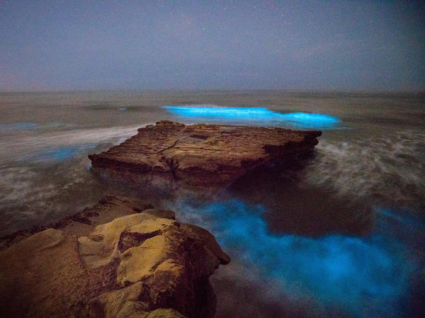 Bioluminescent waves crash against rocks at Torrey Pines State Beach in San Diego on Monday night.