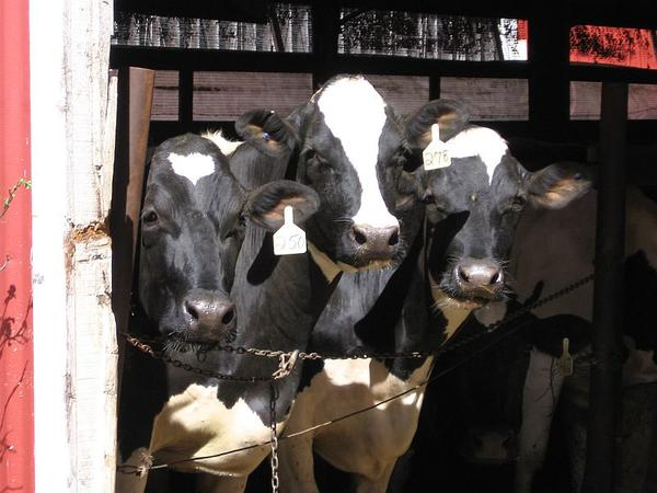 The federal office that sets milk prices for the Northeast recently allowed milk to be dumped at the farm.