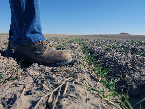 No-till farming is being suggested as a solution for climate change.
