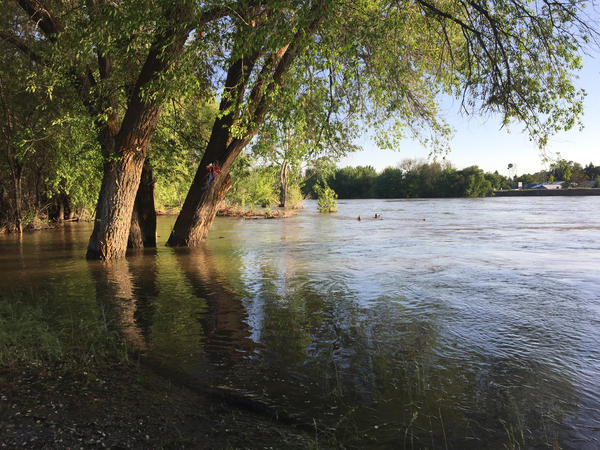 The Okanogan River overflowing its banks near the city of Omak, Washington.