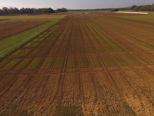 Aerial photo of soybean fields.